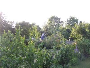 Ogród na Klecinie 1