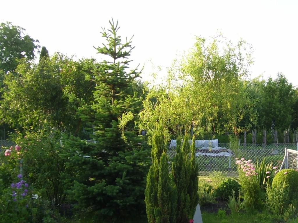 Ogród działkowy na Klecinie 2